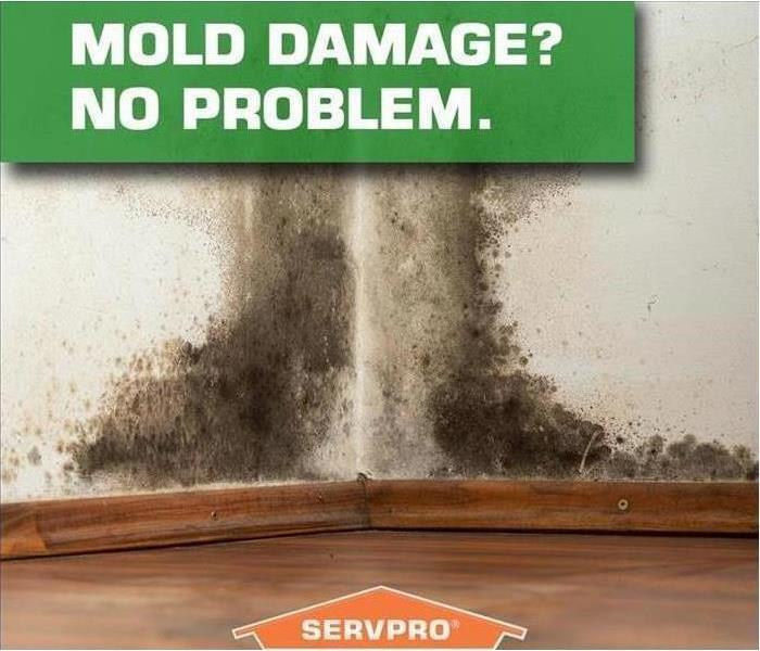 """Mold Damage? No Problem"" written on wall with mold."